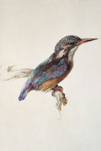 John Ruskin, Study of a Kingfisher, with Dominant Reference to Colour, probably 1871, Watercolour and bodycolour over graphite on wove paper; 25.8 x 21.8 cm, The Ashmolean Museum, Oxford. Presented by John Ruskin to the Ruskin Drawing School (University of Oxford), 1875