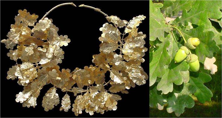 Ποδισκοφόρος δρυς (Quercus robur subsp. pedunculiflora)