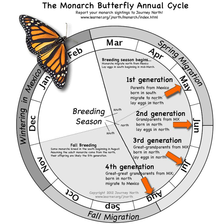 Monarch Butterfly Annual - Journey North. Has complete curriculum for tracking butterflies on their journey #science #homeshool