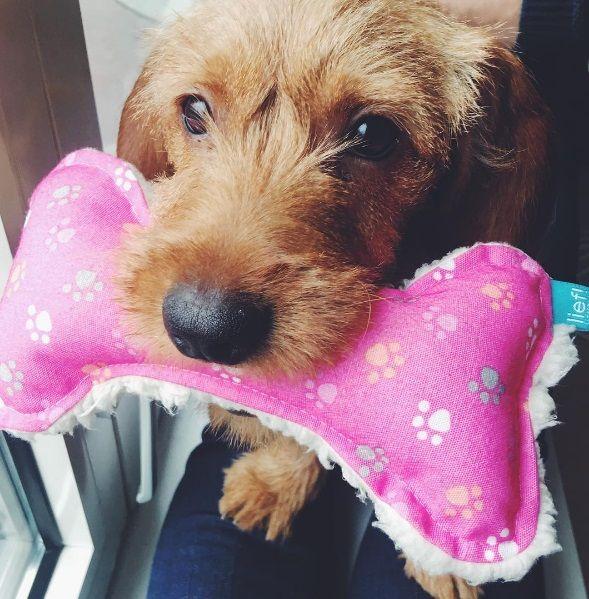 lief! lifestyle dierenaccessoires voor kat & hond - hondenspeeltje roze botje | pets accessories for cats & dogs | basset fauve de bretagne