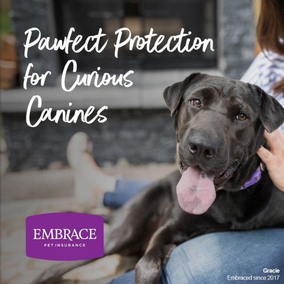 Everything You Need To Know About Embrace Pet Insurance With Images Embrace Pet Insurance Elderly Dog Care Pet Insurance Reviews