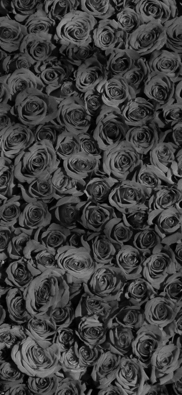 Rose Dark Bw Pattern Iphone X Wallpaper Download Iphone