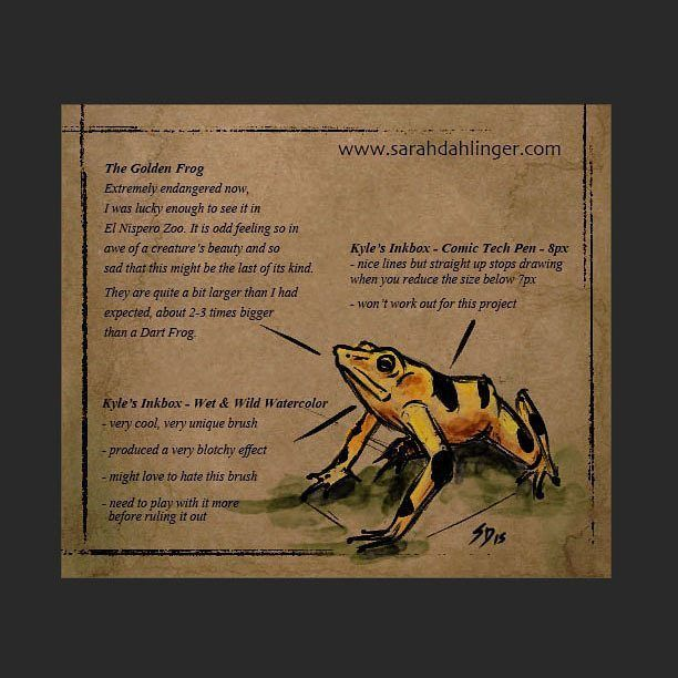 When I was in Panama I met a couple from NYC. I asked them how the local zoo was and they shrugged and said it mediocre;  their main attraction was the Golden Frog.  My heart skipped a beat the Golden Frog! The Golden Frog has been extinct in the wild since 2007 due to a terrible fungal disease called chytridiomycosis. Chytridiomycosis is wiping out a number of frog species all over the world and may be linked to pesticides but as of this writing that hasnt been proven. I saw two golden…