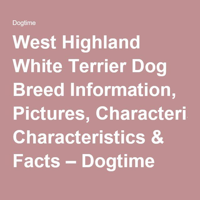 West Highland White Terrier Dog Breed Information, Pictures, Characteristics & Facts – Dogtime