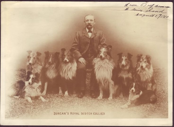 1890s Rough Collies photo: 'Duncan's Royal Scotch Collies'. This photo was uploaded by Pietoro