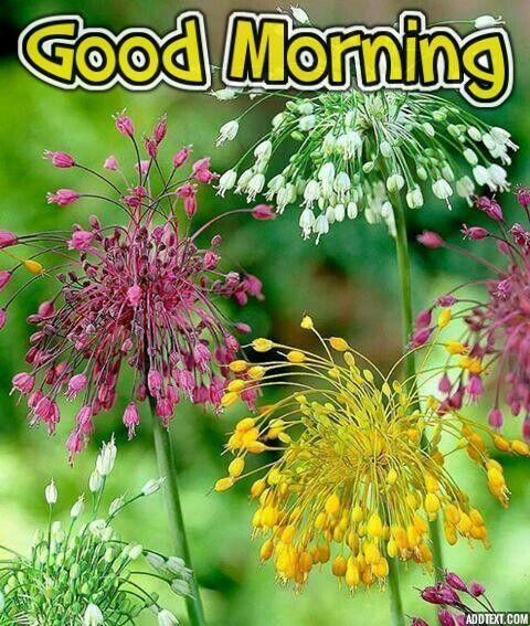 New Good Morning Image Good Morning Images New Good Morning