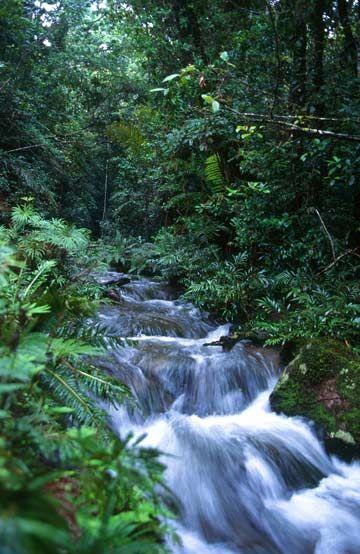 The Daintree Rainforest, Cairns, North Queensland Australia