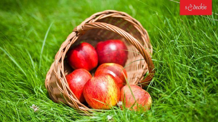 Jabłko to symbol Sądecczyzny. Wyjątkowemu mikroklimatowi kotliny Łącka tutejsze jabłka zawdzięczają swój wyrazisty smak, zapach i soczystość. 18 października 2005 r. Jabłka Łąckie zostały wpisane na Listę Produktów Tradycyjnych. fot. K. Bańkowski