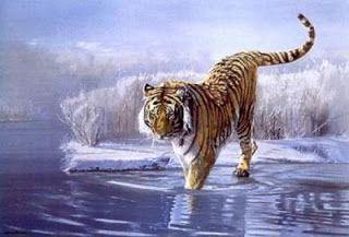 La tigre dell'Amur o tigre siberiana con una popolazione attuale in modesta ripresa dopo un lungo periodo di declino.