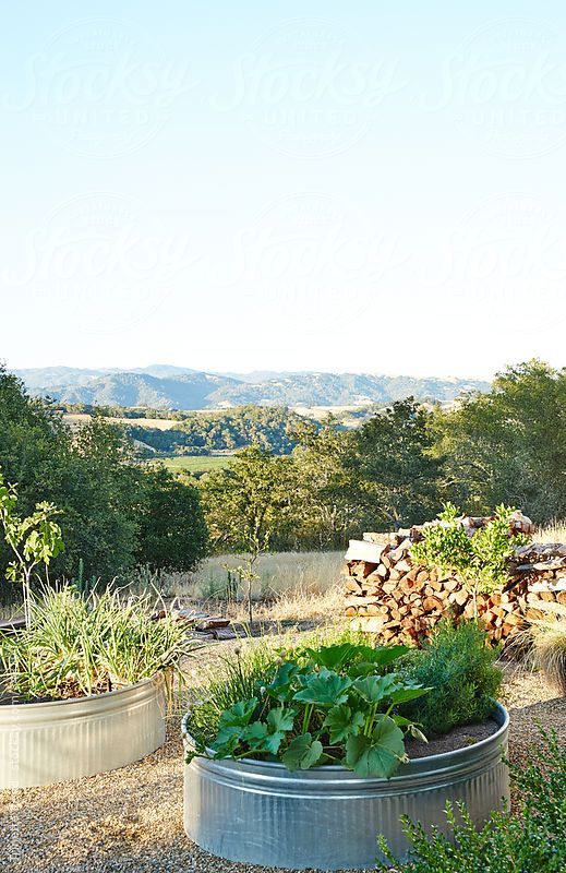 Outdoor container ve able garden in backyard in Sonoma California by Trinette Reed