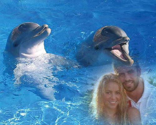 Fotomontajes con delfines
