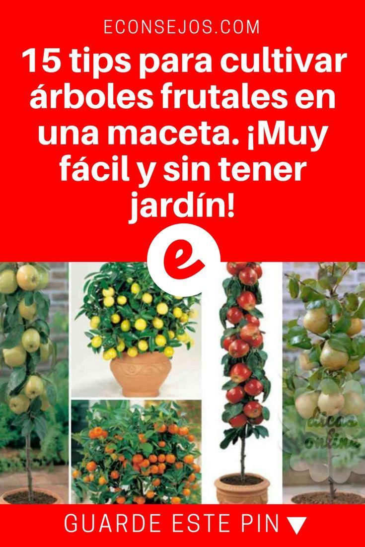 40+ Como plantar arboles frutales en macetas trends