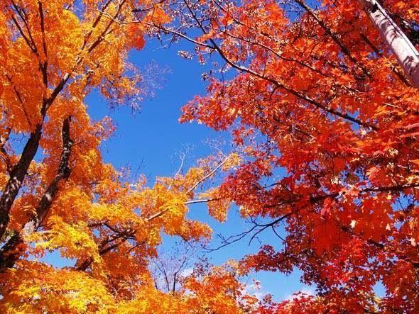 Terpopuler 30 Pemandangan Alam Ciptaan Allah Allah Dalam Keindahan Alam Warungsatekamu Org Download Freetoedit Langitbiru Ind Di 2020 Pemandangan Alam Mengagumkan