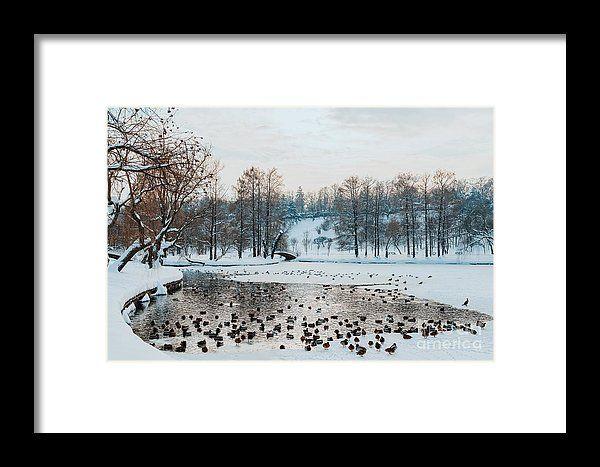 Ducks And Seagull Birds On Frozen Lake In Winter Framed Print