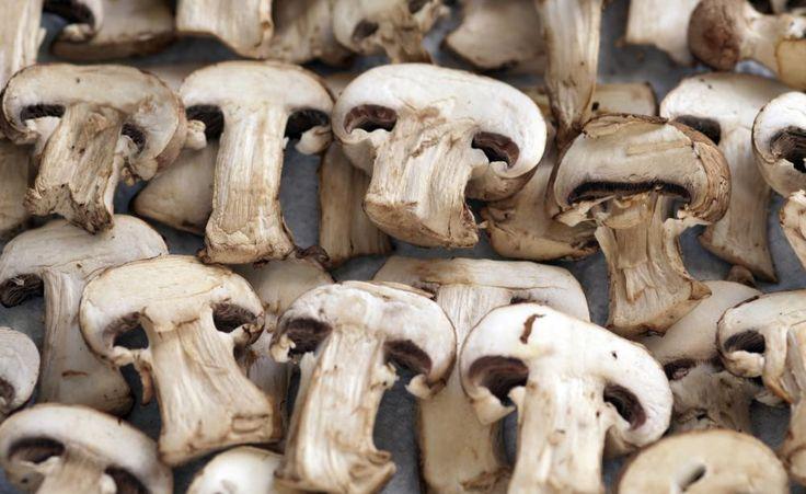 Speise-Pilze selber anbauen