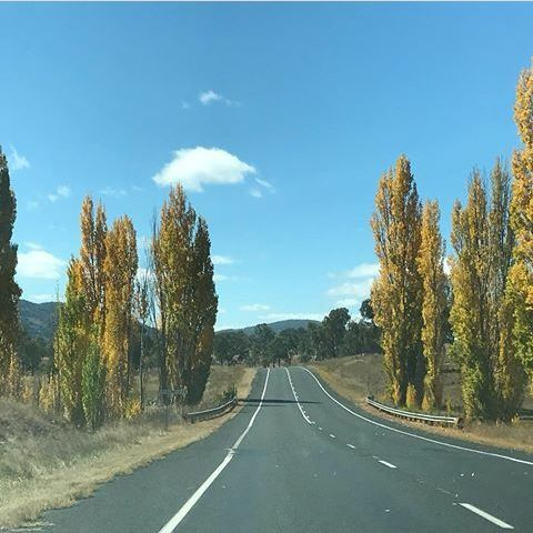 Autumn colours are everywhere.  Heading north from Glen Innes on the New England Highway.  Photo by @angepickett