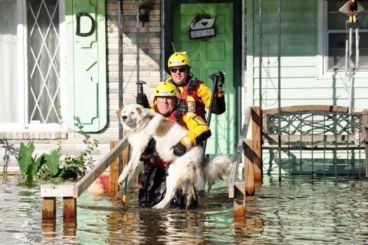 Trying to file and recover from Hurricane Matthew? IRS adds more states/counties in NC, SC, FL and GA to extension relief list. (Rescue workers save a dog stranded by Hurricane Matthew flooding in North Carolina_FEMA)