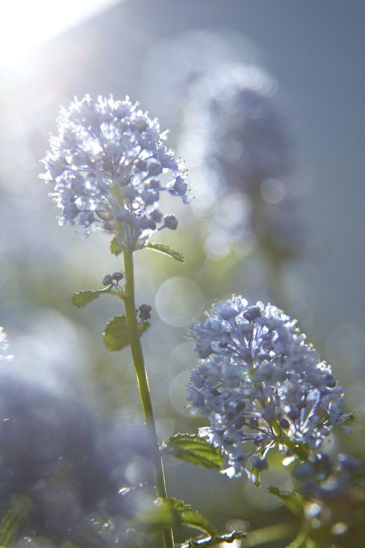 Die Säckelblume richtig schneiden • Pflanzen Tipps & Tricks • 99Roots.com