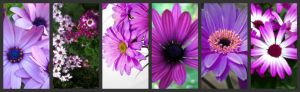 This is only a thumbnail. Please visit http://partymotif.com for the high res, full sized image.   Purple Flowers | Types of Purple Flowers | Names of Purple Flowers | Purple Flower Centerpieces | Purple Flower Arrangements | Purple Bouquets | Purple Centerpieces | Purple Roses | Purple Carnations | Purple Daisy | Purple Lotus | Purple Dahlia | Purple Wedding | Wedding Bouquets | Wedding Flowers