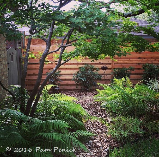 Sparkler sedge chinese mahonia river fern and flax lily for Soft landscaping ideas