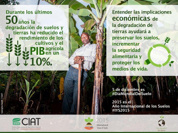 #WorldSoilDay / La degradación de suelos ha reducido el rendimiento de los cultivos y el PIB agrícola