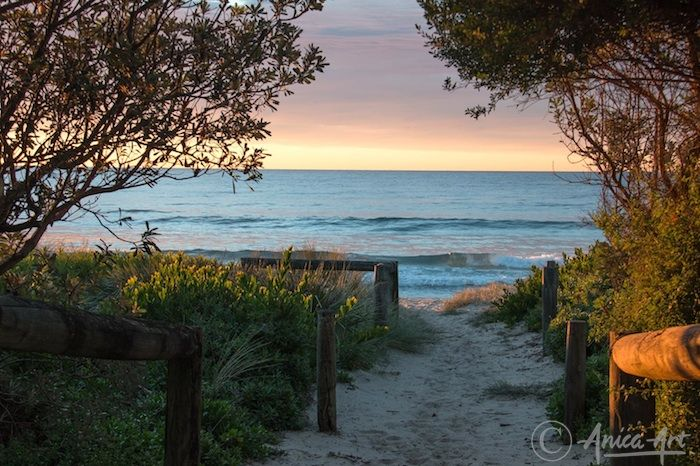 Sunrise through reserve at Mollymook Beach - Pink glow to sunrise at Mollymook Beach through nature reserve