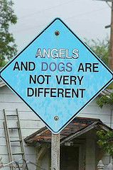 No they aren't so different.  My dogs give me so much more than just a tail wag or a boy wiggle - they give me joy and laughter and distract me from many, many things, such as living with Fibromyalgia!