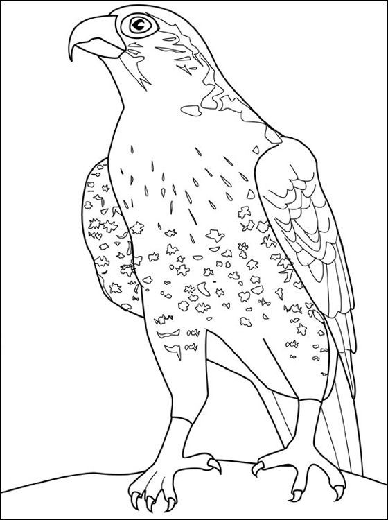 Hawk Falcon Coloring Pages For Kids