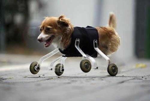 Quand j'ai une mauvaise journée, je pense à ce petit chien!
