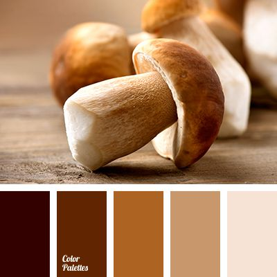 beige color, brown with a gray shade, color of almond, color of almond beans, color of baked clay, color of brown clay, color of ceramics, color of honey