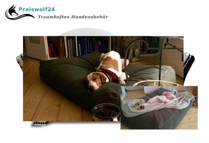 Moleskin Petfab Hundekissen SEHR strapazierfähig - Preiswolf24.de