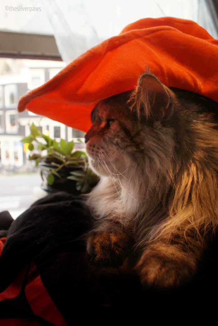 Blake is ready for the game tonight! Hup Holland Hup!