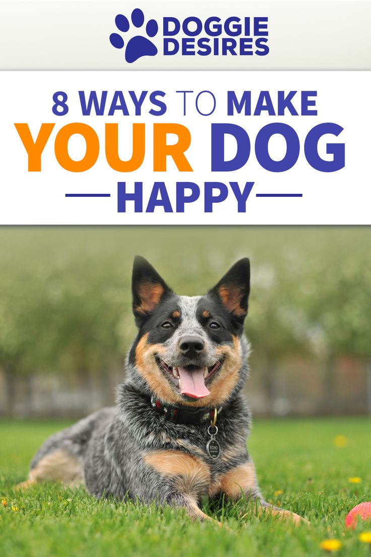 8 Ways To Make Your Dog Happy >> http://doggiedesires.com/ways-to-make-your-dog-happy/