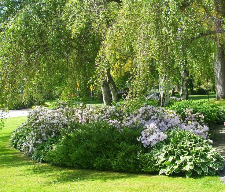 Spring is springing all over in Stanley Park.