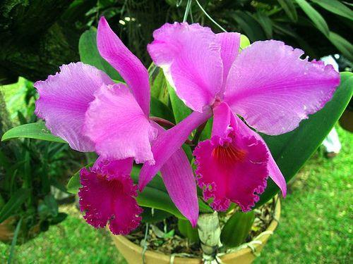 Aqui les presentare 10 tipos de flores de diferentes lados y todas muy bonitas y unicas. 1.-Hibiscus. Comúnmente hibiscos ,220 especies de la familia Malvaceae, típicas de ambientes cálidos, en regiones tropicales y subtropicales....