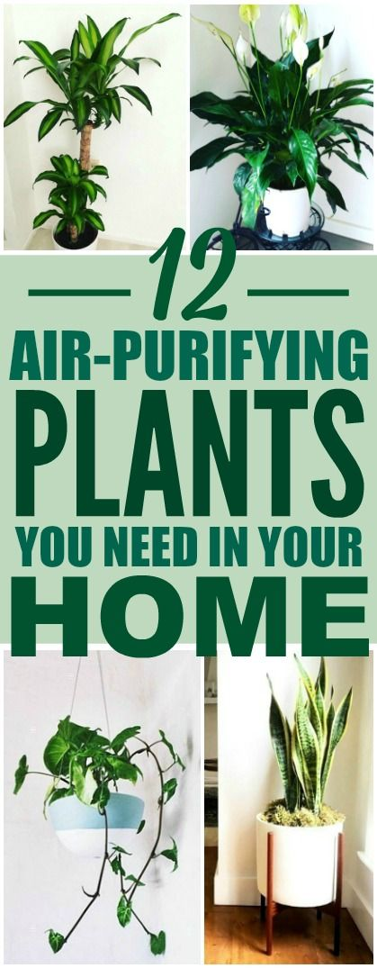 These 12 air purifying plants are THE BEST! I'm so happy I found these AMAZING tips! Now I have some great ideas for low maintenance air purifying plants for my home! Definitely pinning!