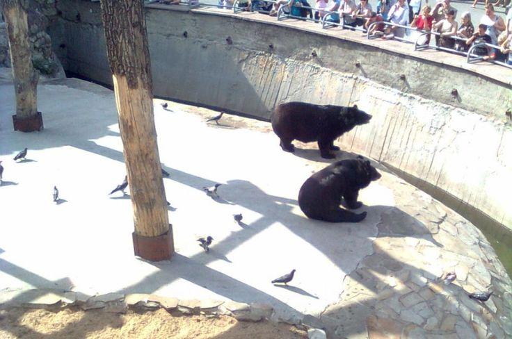 #Travel #tour #Zoo (126)