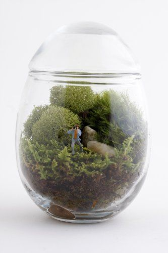 Terrariums with a humorous twist from Twig Terrariums | Offbeat Home