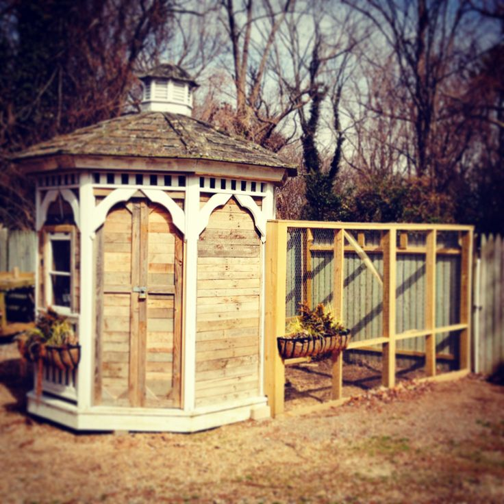 9 best our backyard chicken coop images on pinterest for Gazebo chicken coop