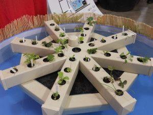 29 best hydroponics images on pinterest aquaponics for Koi aquaponics