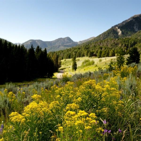 Smell that fresh air. Loan Mountain Guest Ranch in Big Sky, Montana. #DudeRanching #Wanderlusting #SummerofDoing: Beautiful U.S. S A, Montana Wanderlust Summerofdo, Mountain, Fund Usa, Montana Dudes, Hedges Fund, Dudes Ranches, Montana Duderanch Wanderlust, Guest Ranch