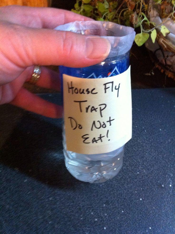 Best 25 Homemade Fly Traps Ideas On Pinterest