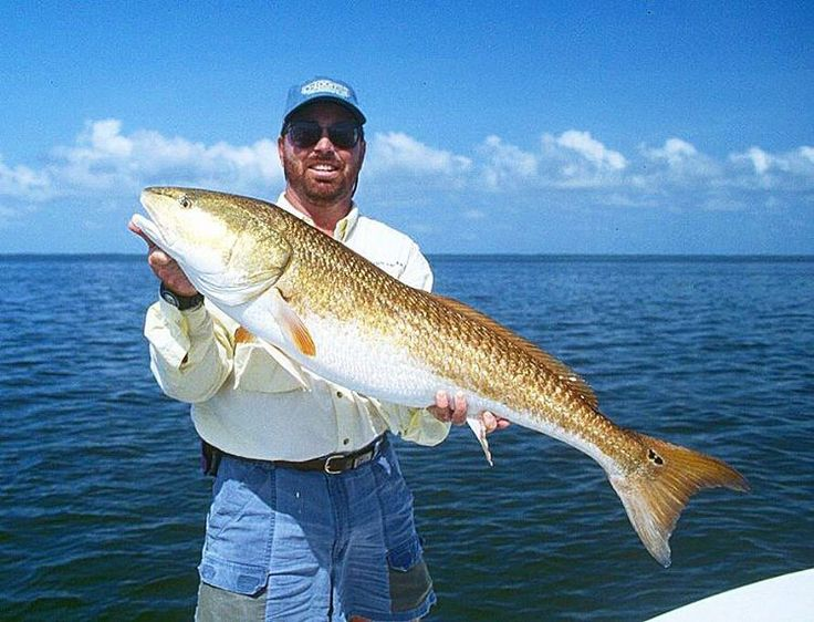 Fish the Flats with Captain Jason Ramsey in Bradenton, Florida