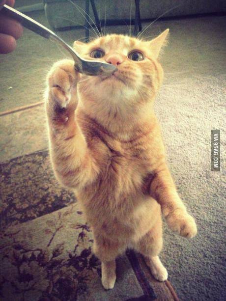 cat ♥(ᵔᴥᵔ)