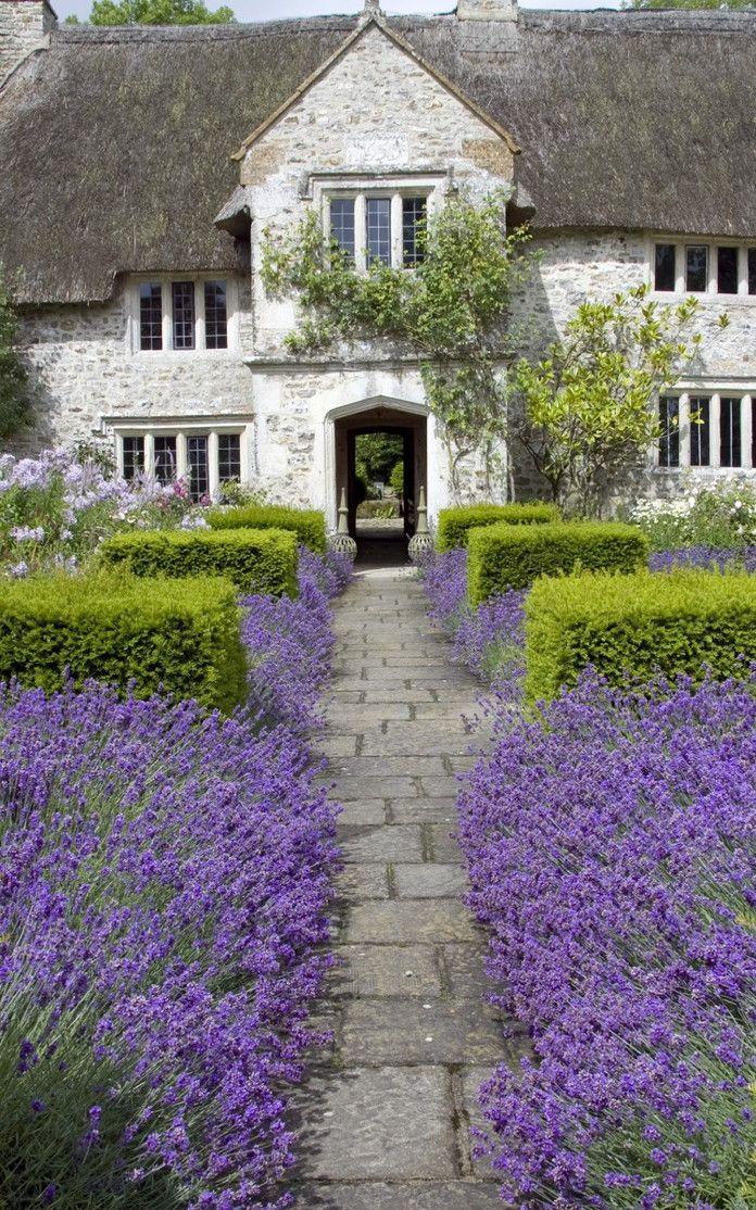 Renovation of a 17th century farmhouse, Devon, UK.  Lavender and boxwood courtyard
