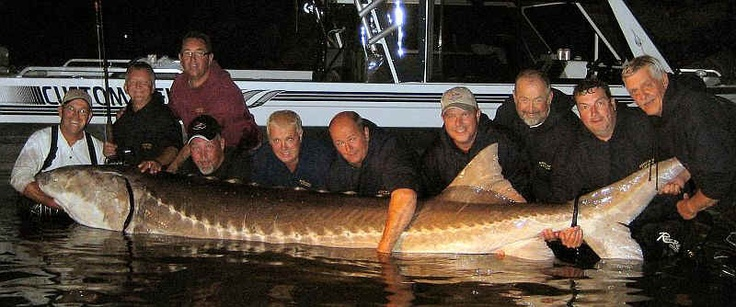 Giant Sturgeon | Fish & Game | Pinterest