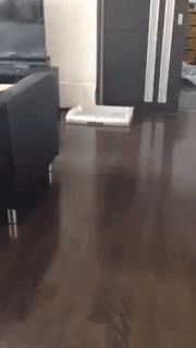IT'S DOGGITY DUMPITY TIME! Collection of gifs with our best friends - DOGGOS! - Imgur
