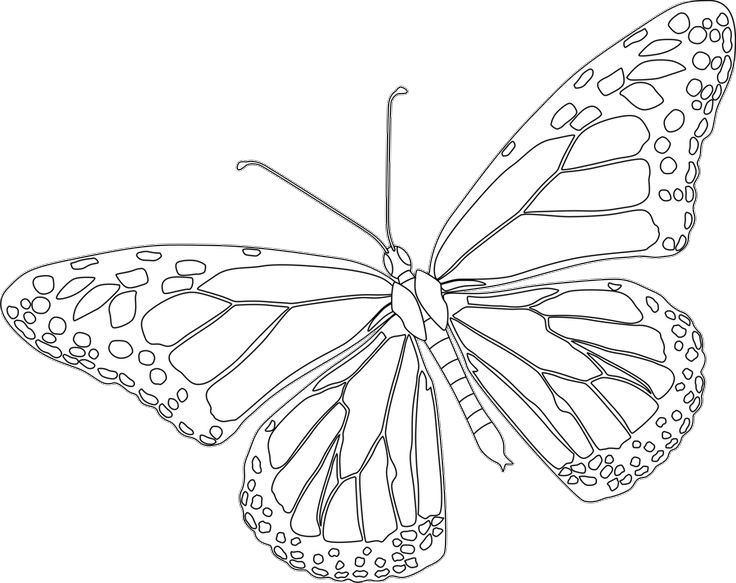 Monarch Butterfly Coloring Pages Printable Butterfly Coloring