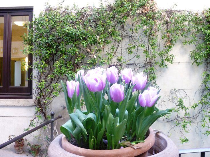 Tulips Villa D'este, Tivoli