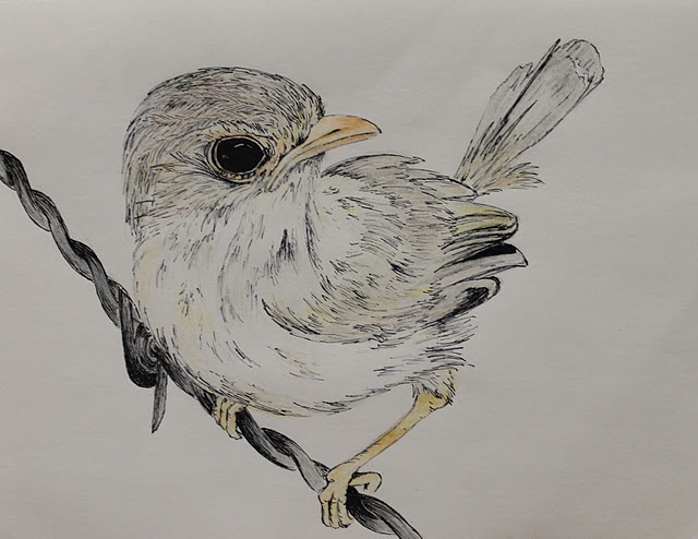 Little Finch Bird Drawing By Maria Farinola | Bird Art By Maria Farinola | Pinterest | Finches ...